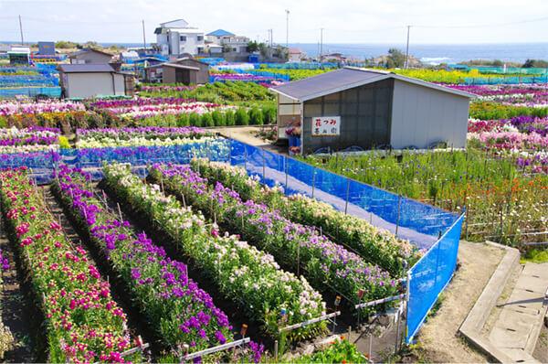 꽃밭 체험