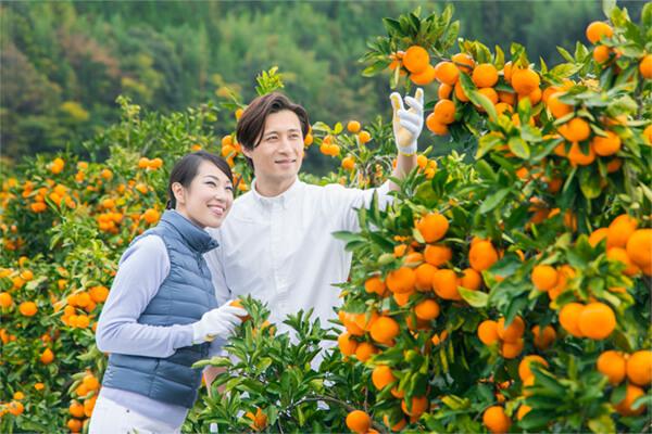 เก็บเกี่ยวส้ม